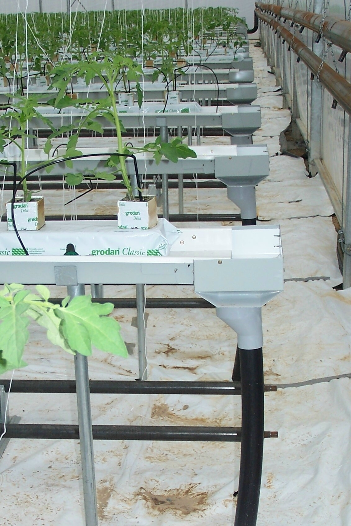 Commercial Grow Room Design: Drip Fertigation Systems