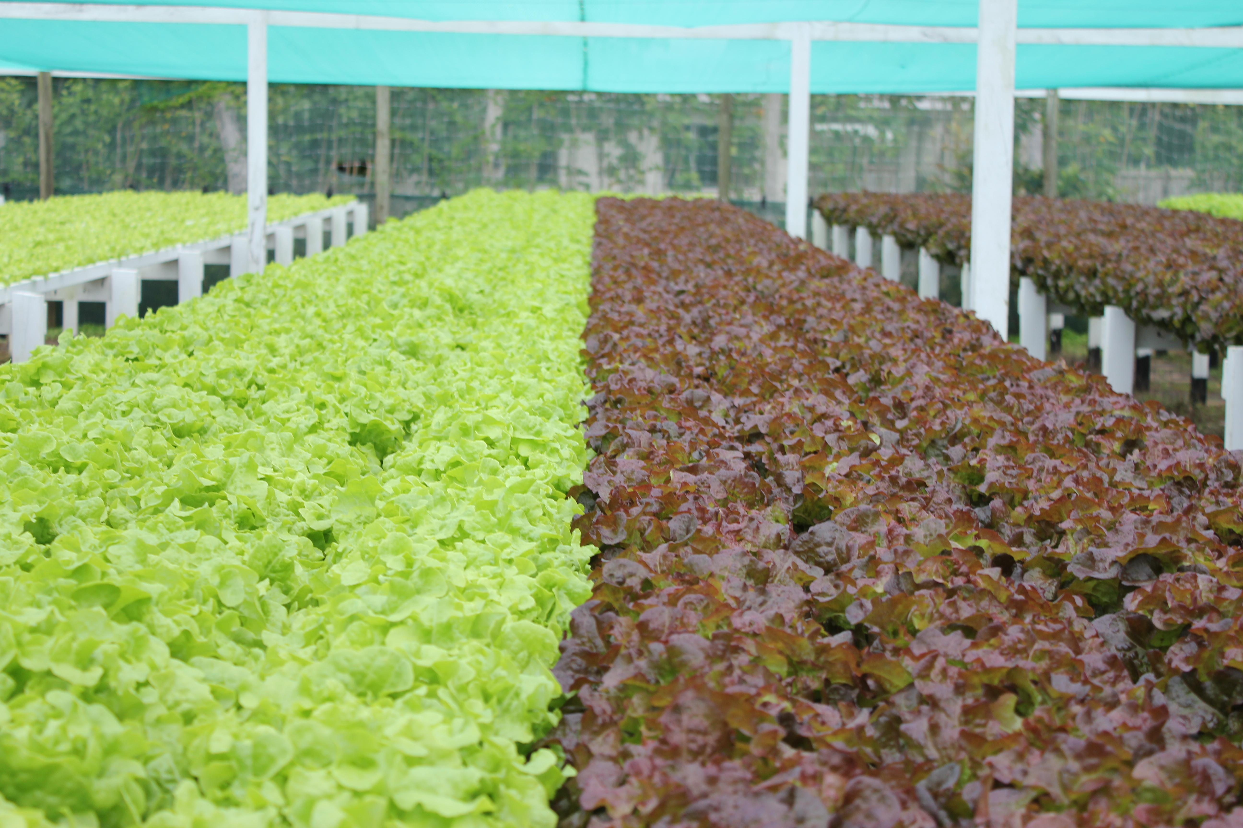 NFT Fixed Bench Systems - Pure Hydroponics